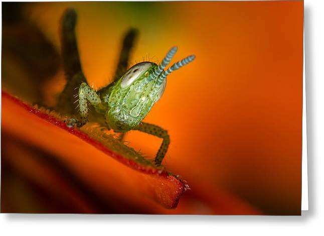 Top Seller Greeting Cards - Hello Grass Hopper Greeting Card by Tin Lung Chao
