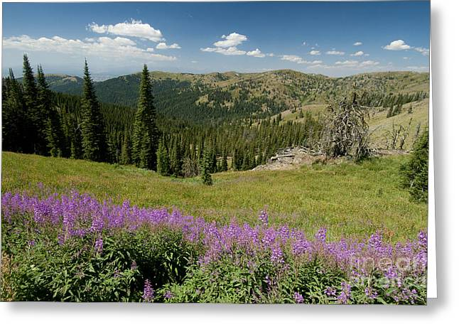Idaho Scenery Greeting Cards - Hells Canyon National Recreation Area Greeting Card by William H. Mullins