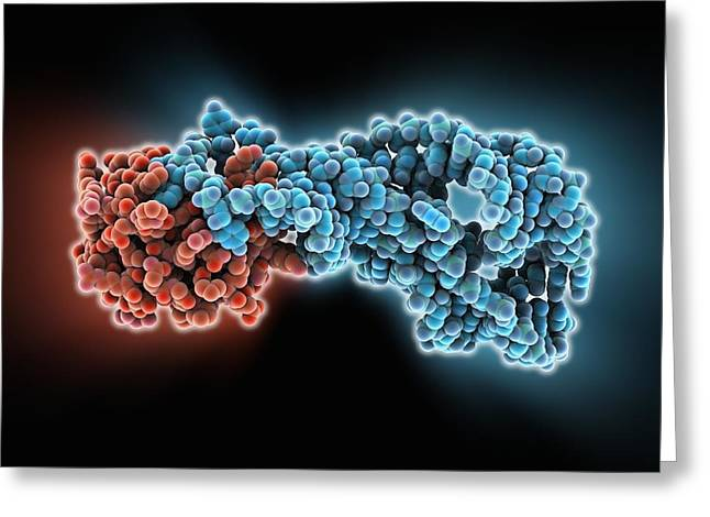 Hepatitis D Virus Ribozyme Complex Greeting Card by Science Photo Library