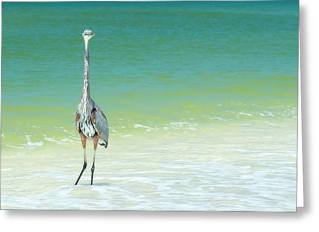 Aquarium Fish Greeting Cards - Heron On A Sunny Beach In Florida Greeting Card by Fizzy Image