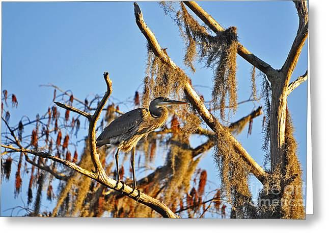 Gray Heron Greeting Cards - Heron On High Greeting Card by Al Powell Photography USA