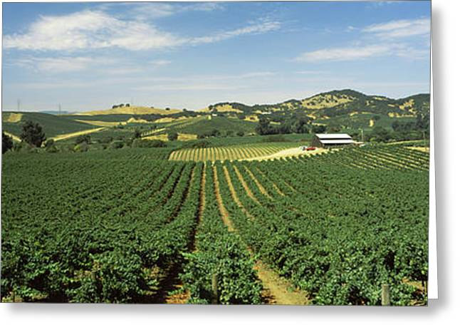 Vineyard Landscape Greeting Cards - High Angle View Of A Vineyard, Carneros Greeting Card by Panoramic Images
