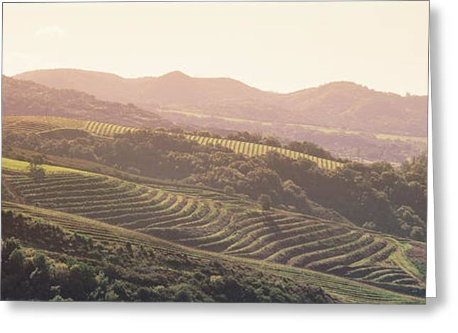 Sonoma County Vineyards. Greeting Cards - High Angle View Of A Vineyard Greeting Card by Panoramic Images