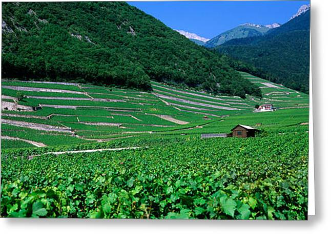 Winemaking Greeting Cards - High Angle View Of A Vineyard, Valais Greeting Card by Panoramic Images
