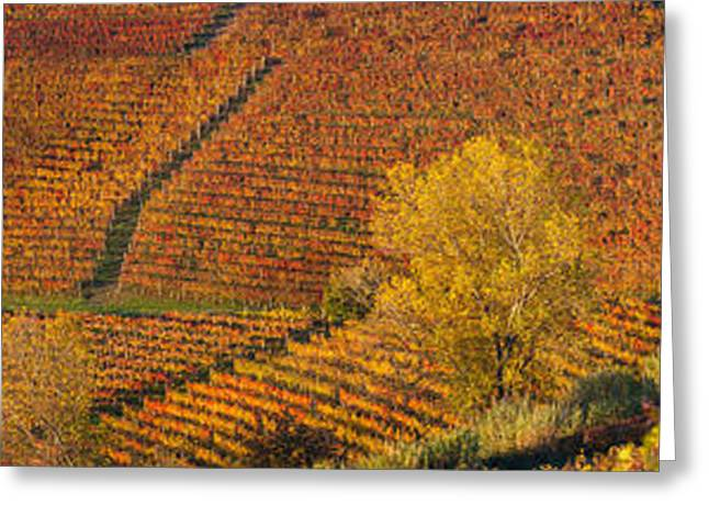 Vineyard Landscape Greeting Cards - High Angle View Of Vineyards, Alba Greeting Card by Panoramic Images