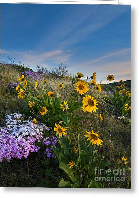 Phlox Greeting Cards - High Desert Spring Greeting Card by Mike  Dawson