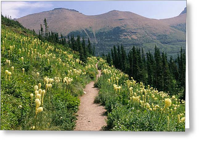 Us Glacier National Park Greeting Cards - Hiking Trail With Beargrass Xerophyllum Greeting Card by Panoramic Images