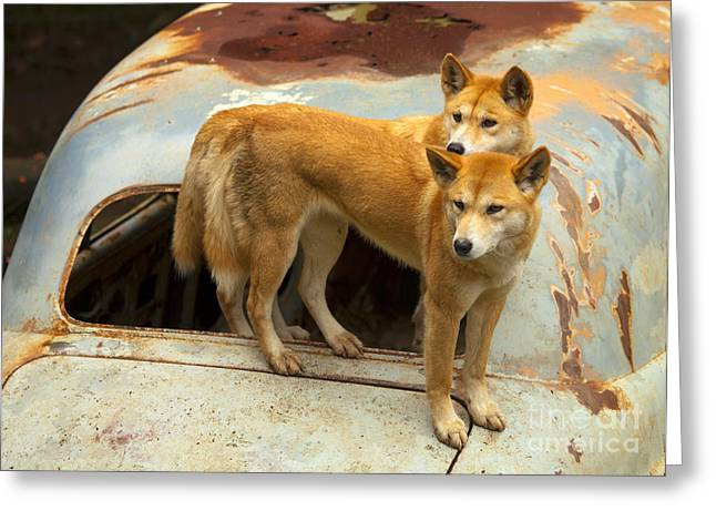 Australian Photographs Greeting Cards - Hitching a Ride Greeting Card by Mike  Dawson