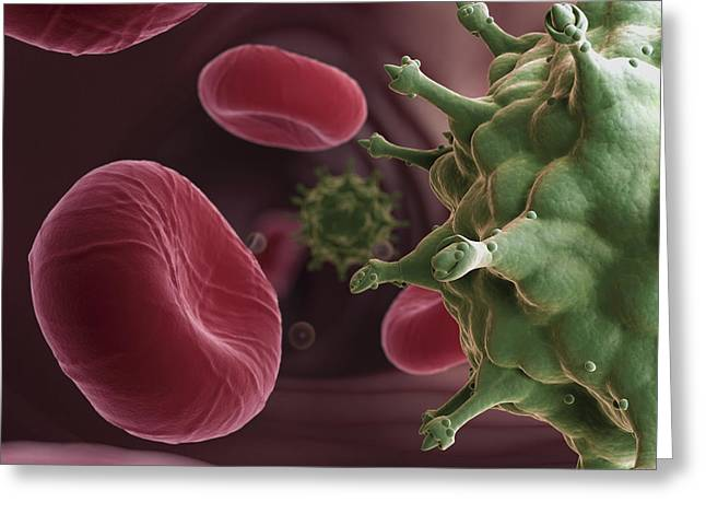 Infection Greeting Cards - Hiv Infection Greeting Card by Science Picture Co