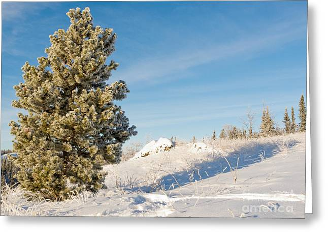 Wintry Greeting Cards - Hoar frost covered pine tree winter snow landscape Greeting Card by Stephan Pietzko