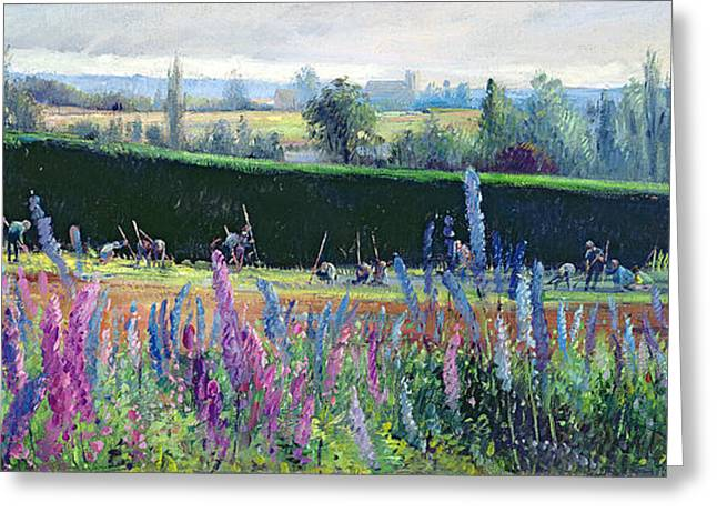 Lupin Greeting Cards - Hoeing Against The Hedge Greeting Card by Timothy Easton