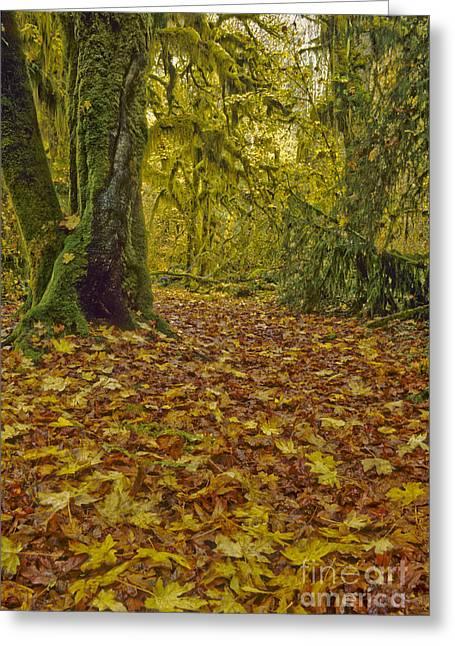 Hoh Rain Forest, Washington Greeting Card by Richard and Ellen Thane