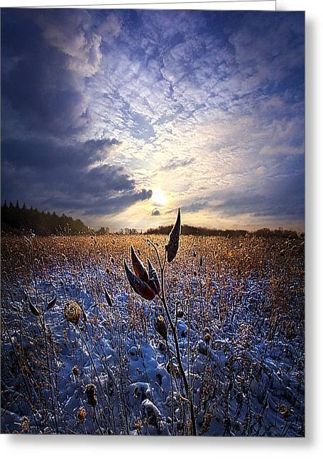 Milkweed Greeting Cards - Holding On Greeting Card by Phil Koch