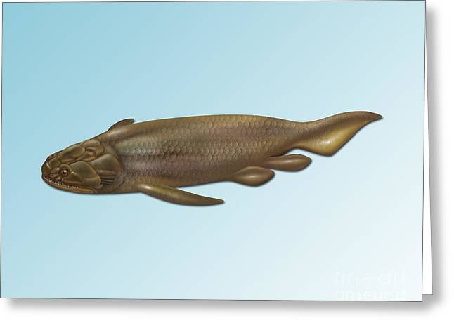 Fossil Art Greeting Cards - Holoptychius, Extinct Fish Greeting Card by Gwen Shockey