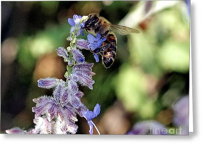 My Ocean Greeting Cards - Honey Bee Greeting Card by   FLJohnson Photography