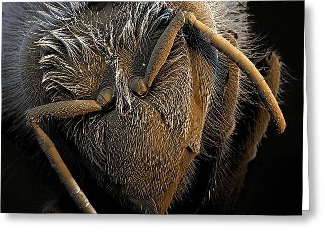 Sem Greeting Cards - Honey Bee Head, Sem Greeting Card by Stefan Diller