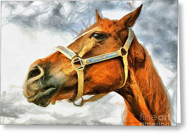 Majestic Pastels Greeting Cards - Horse Face Drawing Greeting Card by Daliana Pacuraru