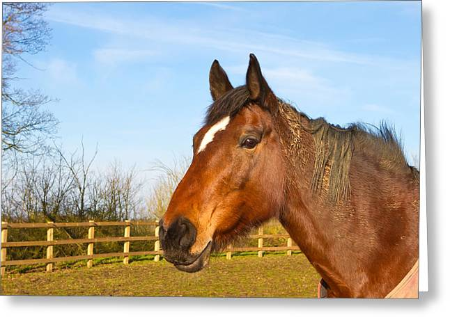 Spring Training Photographs Greeting Cards - Horse in field wearing horse rug Greeting Card by Fizzy Image