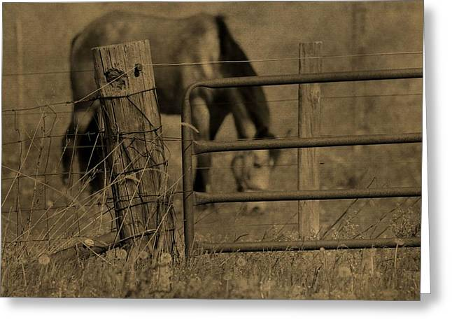 Old Fence Posts Greeting Cards - Horse On The Farm Greeting Card by Dan Sproul