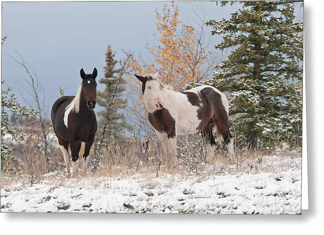 Equus Ferus Caballus Greeting Cards - Horses In Snow, Yukon, Canada Greeting Card by Mark Newman