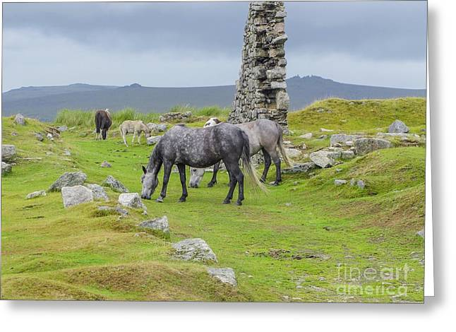 Farmlife Greeting Cards - Horses on the moors of Dartmoor Greeting Card by Patricia Hofmeester