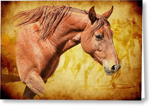 Horse In Water Paint Greeting Cards - Horses Greeting Card by Steve McKinzie