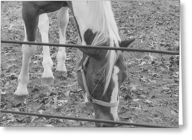 Horses Pyrography Greeting Cards - Horses Greeting Card by Tonyah Nichols