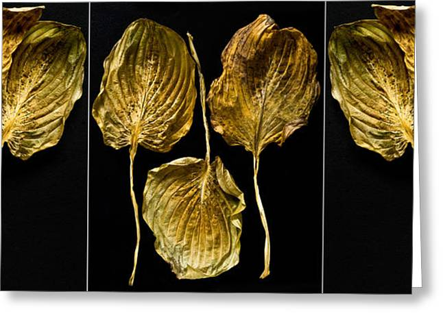 Gold Leave Greeting Cards - Hosta Triptych Greeting Card by Roger Lapinski