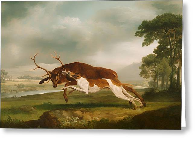 Attack Dog Greeting Cards - Hound Coursing a Stag Greeting Card by George Stubbs