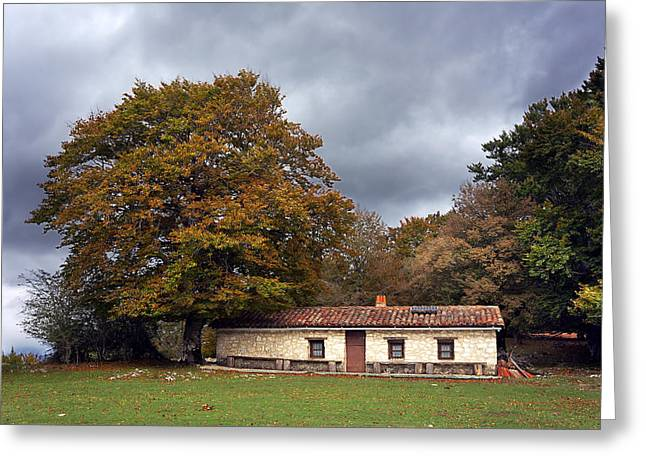 Mountain Cabin Greeting Cards - House In Autumn Forest Greeting Card by Mikel Martinez de Osaba
