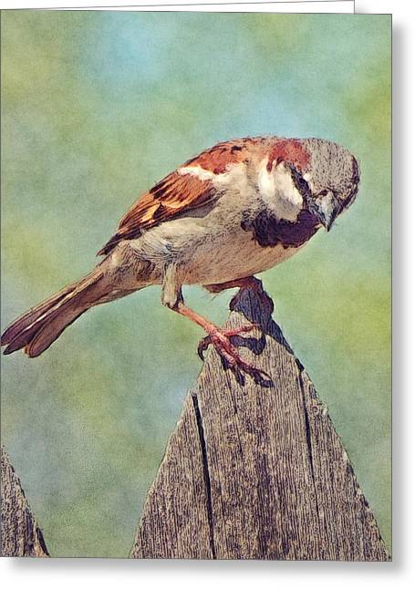 Sparrow Digital Art Greeting Cards - House Sparrow Greeting Card by David G Paul