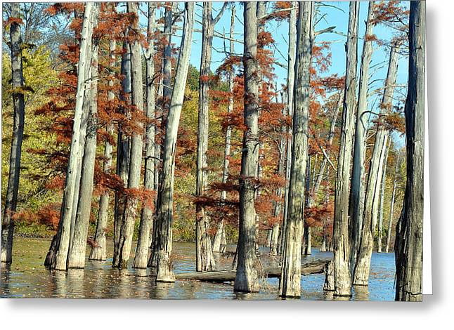 Indiana Autumn Greeting Cards - Hovey Lake Indiana Greeting Card by Marsha Williamson Mohr