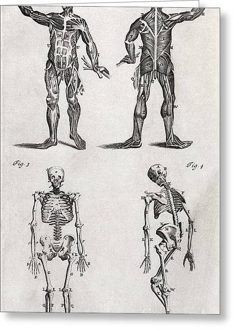 1704 Greeting Cards - Human Anatomy, 18th Century Artwork Greeting Card by Middle Temple Library