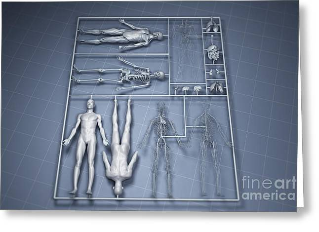 Model Kits Greeting Cards - Human Cloning Greeting Card by Science Picture Co