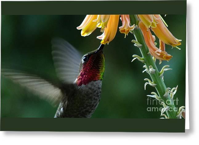 Shower Curtain Greeting Cards - Hummingbird 2 Greeting Card by Chandra Nyleen