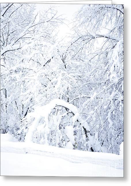 Hurricane Sandy Photographs Greeting Cards - Hurricane Snow  Greeting Card by Thomas R Fletcher