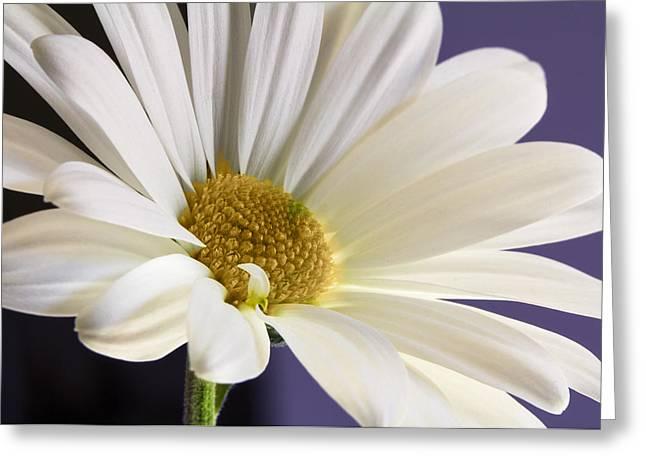 Barbara Smith Greeting Cards - Hurry Spring Greeting Card by Barbara Smith