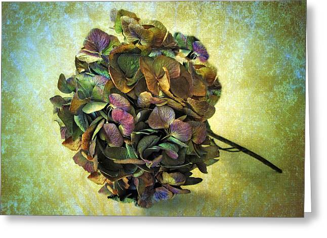 Texture Flower Greeting Cards - Hydrangea Still Life Greeting Card by Jessica Jenney