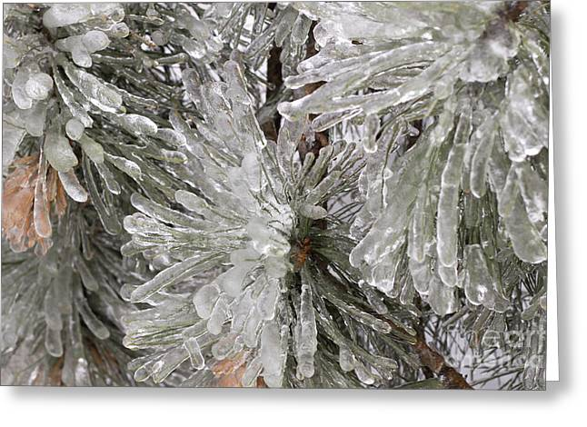 Nature Abstracts Greeting Cards - Ice on pine branches Greeting Card by Blink Images