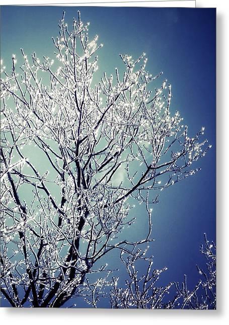 Bare Trees Digital Greeting Cards - Ice Tree Greeting Card by Natasha Marco