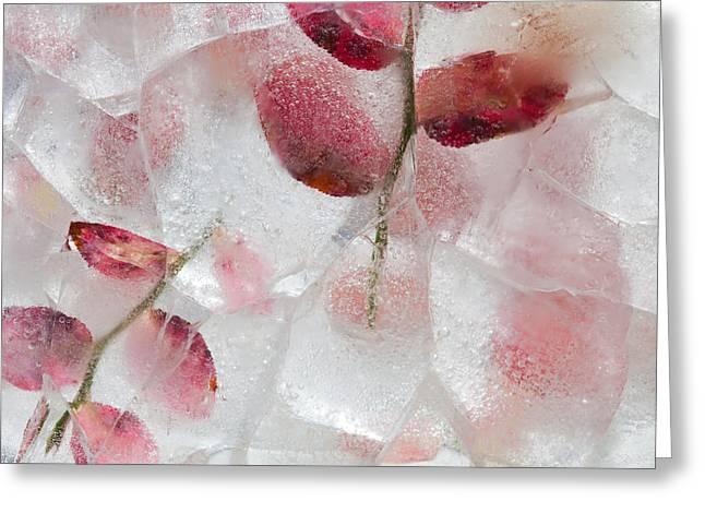 Temperature Greeting Cards - Icy Plants Greeting Card by Tamara Kulikova