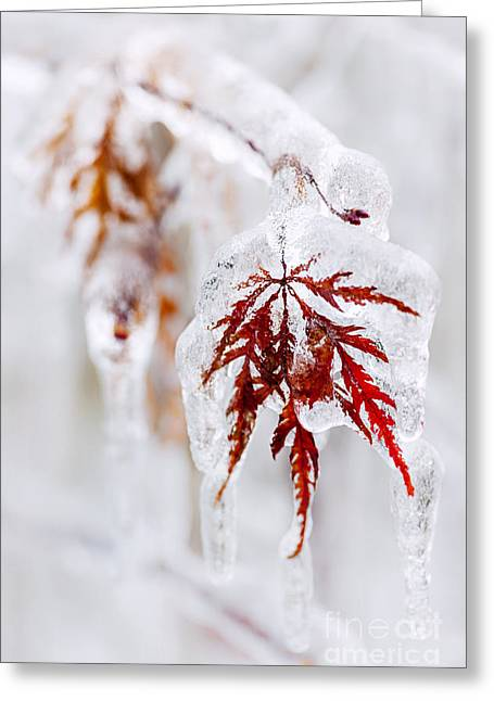 Leafs Greeting Cards - Icy winter leaf Greeting Card by Elena Elisseeva