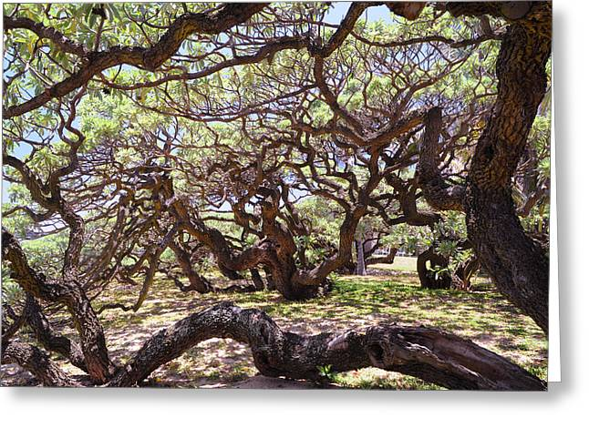 Mystic Art Greeting Cards - In the Depth of Enchanting Forest Greeting Card by Jenny Rainbow