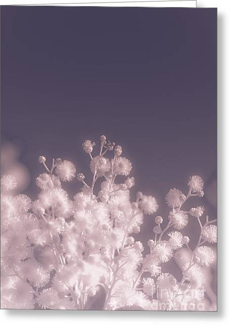 Infrared Nature Bloom Greeting Card by Jorgo Photography - Wall Art Gallery