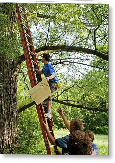 Installing A Nesting Box Greeting Card by Jim West