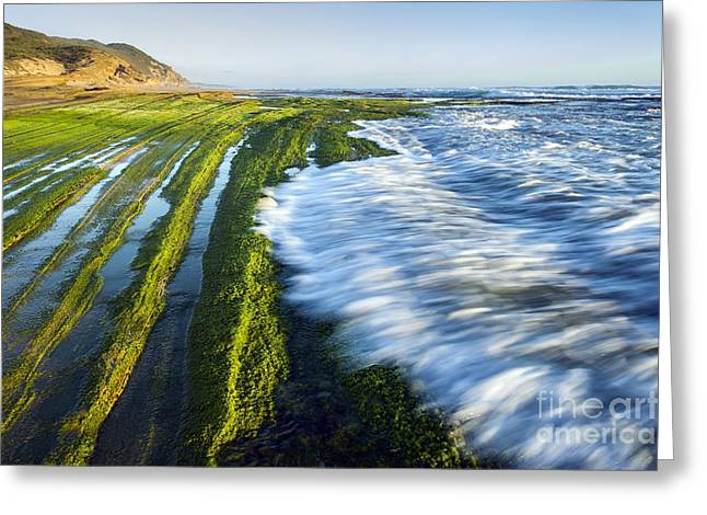 Intertidal Zone, South Africa Greeting Card by Peter Chadwick