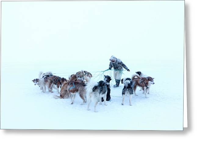 Inuit Hunter And Husky Dog Team Greeting Card by Louise Murray