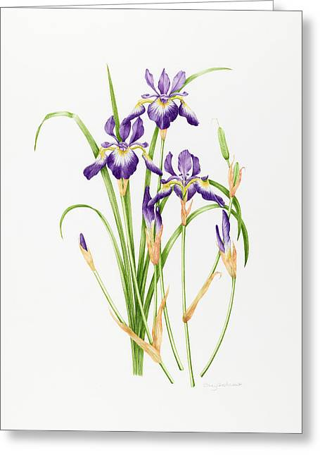 Tasteful Greeting Cards - Iris Sibirica Greeting Card by Sally Crosthwaite