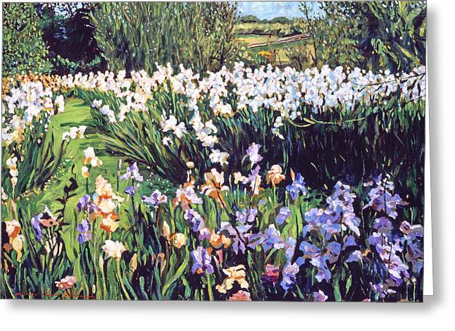 Europe Paintings Greeting Cards - Irises Provence Greeting Card by David Lloyd Glover