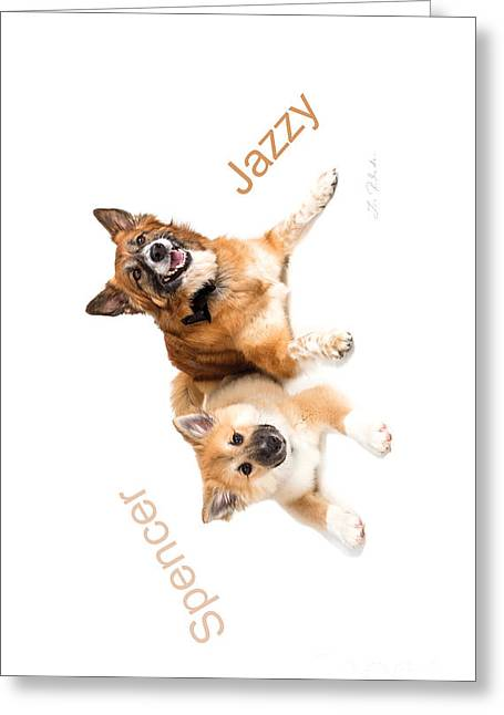 Owner Photographs Greeting Cards - Islandig Sheepdog Iphone 4 case Greeting Card by Iris Richardson
